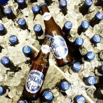 Polar bier koud